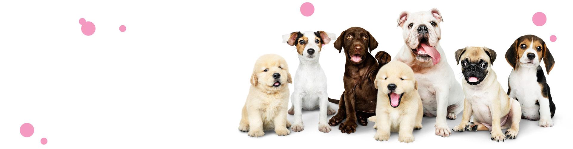 tienda perros almeria